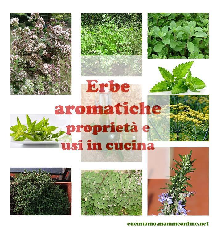 Erbe aromatiche: proprietà e usi in cucina – CuciniAmO