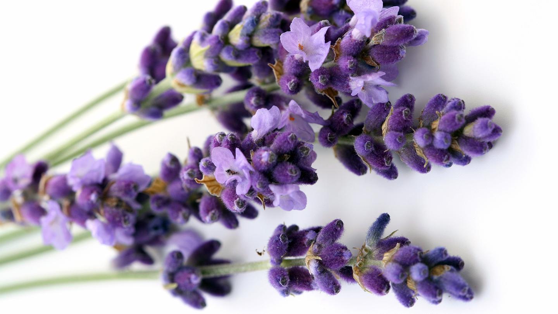 Fiori in cucina quali fiori si possono mangiare cuciniamo for Fiori di lavanda